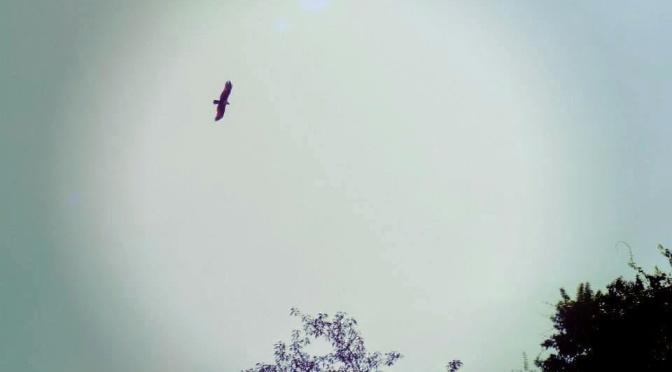 A Bela e o Pássaro
